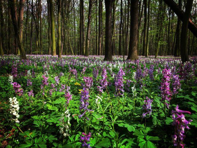 Lužní les u Byšiček