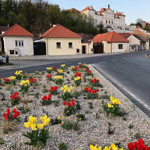 Jaro ve meště